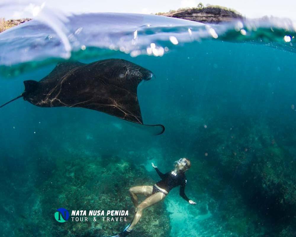 Gamat Bay Nusa Penida Tour