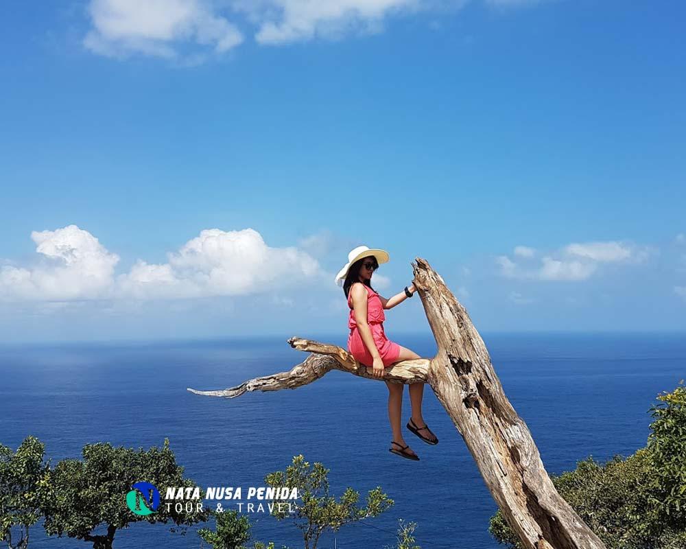 Pohon Cinta Nusa Penida Tour